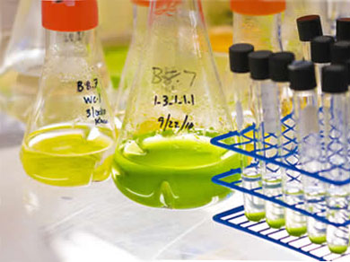 Перспективы биотоплива